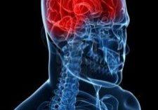 6003203-highlighted-brain abc.net.au (Mobile)